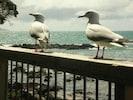 Seagulls on deck