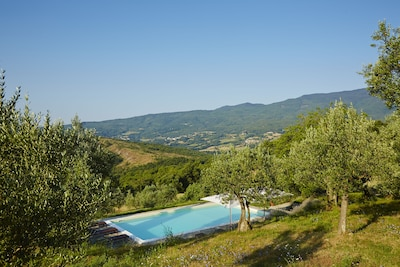 The pool among the olive trees, with uninterrupted views across the Tuscan hills