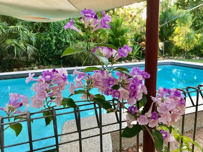 Spring Homestead; a tropical oasis.