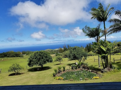 Maui Views, lovely yard full of fruit and avocado trees.