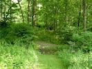 Trail to the Picnic Area