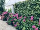 l'accueil des hortensias