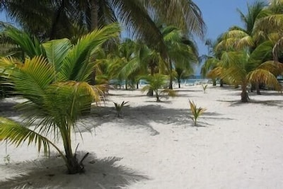 Terrain de 2000 M² arboré de cocotiers
