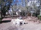 jardin  2000 m(chêneraie) derrière la villa   - mobilier de jardin et barbecue