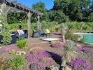 Le coin détente avec la piscine au pied des vignes et le jardin sec comme écrin.