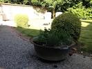 quelques herbes aromatiques pour nos hôtes.