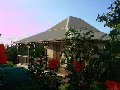La location , lumière du matin avec hibiscus