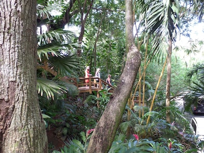 Or Guests descending from the Tree-house to our awaiting Limousine below.