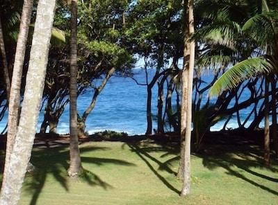 Plage Isaac Hale Beach Park, Pahoa, Hawaï, États-Unis d'Amérique