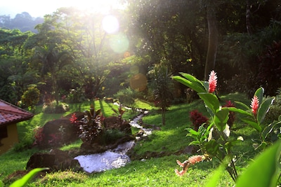 Property in the rainforest features tropical garden trails with streams & rivers