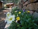 Summer wall garden along walkway to cabin studios