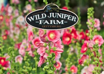 We're Wild Juniper Farm in Historic Gettysburg, PA