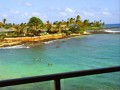 From our lanai, we can watch turtles feed and see whales in winter.