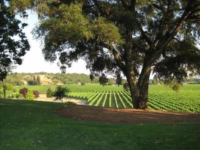 Enjoy lawns, gardens, and a walk in through our vineyards