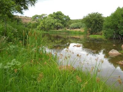 Oak Creek Upstream
