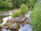 Rocky Area of River