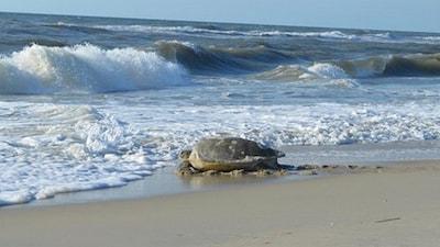 Ocean Colony South, Nags Head, North Carolina, United States of America