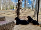 Well mannered dogs are always welcome! Offering 40 acres of off leash fun