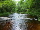 Our beautiful stream is perfect to fish, wade, tube, kayak & canoe.