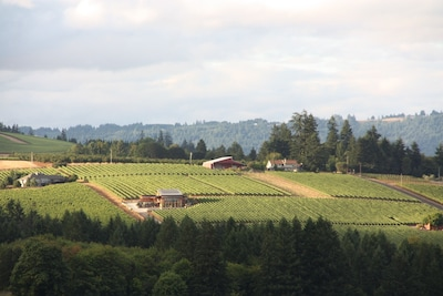 Views of the vineyards and tasting rooms along Worden Hill Road