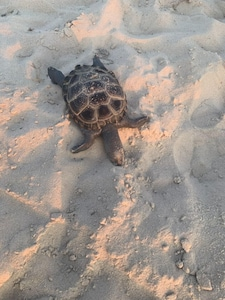 Sea Turtle seen near Sunset Villa  by one of our guests during a visit July 2019
