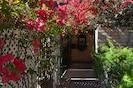 Bougainvilleas in bloom along pool walkway