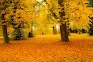 Fall/Autumn Bansha Castle