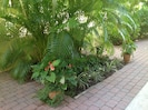 Beautiful plants in the middle of courtyard