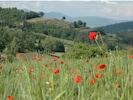 Casa Fontemaggio viewed from poppy fields