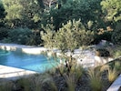 The view of the pool from the house through the olive tree