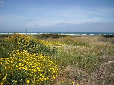 Pazzona Beach, Stintino, Sardinia, Italy