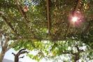 Sous la pergola, la treille de raisins protège délicatement du soleil