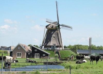 's-Molenaarsbuurt, Alphen aan den Rijn, Südholland, Niederlande