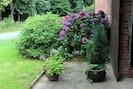 Hortensien vor dem Haus