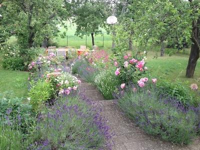 Blick in den Garten zur Rosenblüte