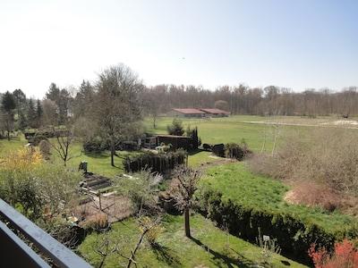 Der Blick nach links in dem Garten