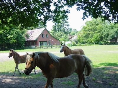 Blick über die Pferdeweise