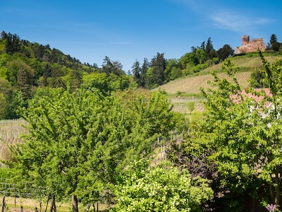 De la propriété vue sur le château de Kintzheim et ses vignes