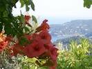 From Orchard Villa - Kanapitsa beach and taverna on Kalamaki Point