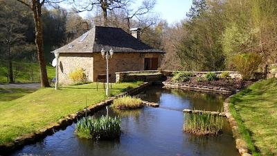 Extérieur - Terrasse et barbecue - Bassin et plantes aquatiques