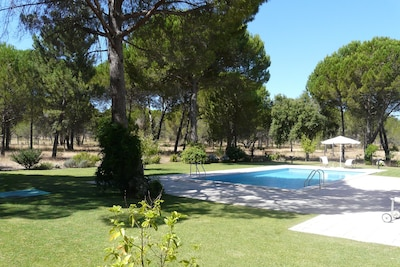 the lawn around the pool surrounded by pine trees