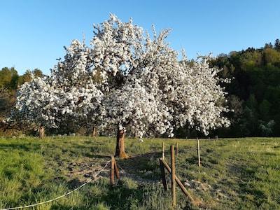 Frühling in Flunau