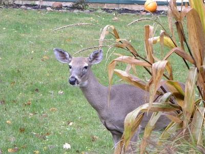One of the neighbors.....