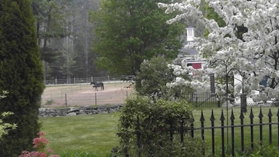 The beautiful grounds in Springtime when we had horses on property.