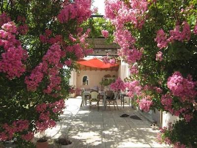 vue sur la terrasse fleurie