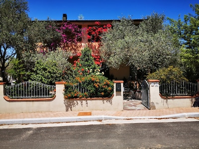 Olìa Speciosa, Castiadas, Sardinien, Italien