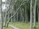 Der berühmte Gespensterwald bei Nienhagen