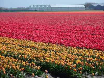 Frühling in Callantsoog