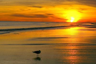 Beautiful Sunset from Windjammer Condos at Ocean Isle Beach!