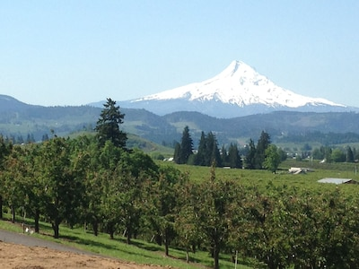 Mt. Hood from our house.
